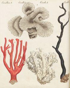 Picturebook for Children, Bertuch 1801 | BILDGEIST