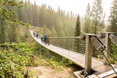 Vacation Places, Vacations, Alberta Travel, Banff Canada, Hiking Essentials, Canadian Travel, Suspension Bridge, Outdoor Adventures, Travel Stuff