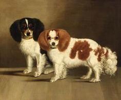 The many things we all admire about the Energetic Cavalier King Charles Spaniel Pup King Charles Dog, King Charles Spaniel, Cavalier King Charles, Cavalier King Spaniel, Dog Competitions, Spaniel Breeds, Lap Dogs, Dog Portraits, Animal Paintings