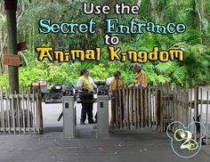 This is one of my most popular posts!  If you all keep sharing it, the Animal Kingdom Secret Entrance won't be such a secret anymore!  ;)