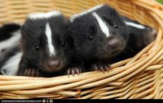funny pictures - Daily Squee: Squee Spree - A Basket of Squee!