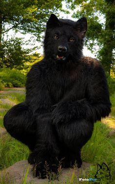 Friendly Wolf by FotoFurNL on DeviantArt
