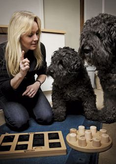 dream job! Designing dog puzzles for dog's enrichment... Nina Ottosson's products and her story are amazing...