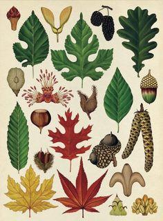 2.Botanicum-immagini-©-2016-by-Katie-Scott-design-copyright-©-2016-by-The-Templar-Company-Limited-©-2017-by-Mondadori-Electa-S.p.A.-Milano-553x750.jpg (553×750)