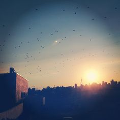Birds in flight Birds In Flight, Celestial, Sunset, Pictures, Outdoor, Photos, Outdoors, Flying Birds, Sunsets