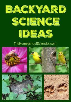 backyard science ideas the homeschool scientist