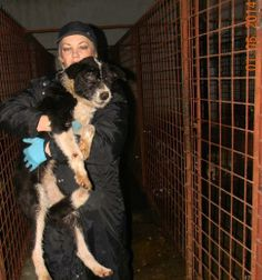 SHARE;HELP!!ROMANIA-Every day Carmena from Pro Animals Romania organozation goes to Tg-Jius Public Shelter to feed the dogs and when she can she saves sickest,weakest  from this HELL.There is already 600+dogs in PARs shelter to feed +the PS dogs.WANT TO HELP? See PARS FB page or donate:Donations:Paypal:pro_animals@yahoo.com Bank -Account no. RO56BTRL02004205267407XX, SWIFT : BTRLRO22,Name: Asociatia Pro Animals; Transilvania Bank Tg-Jiu