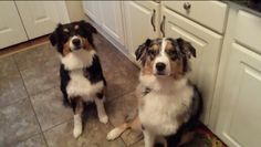 Annabella and Ranger say hello.  Annabelle is 11 months old today.