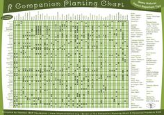 dummies guide to vegetable gardening