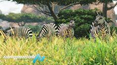 juego de animales para PC llamado Cabelas African Adventures PC Full Flt con fecha oficial de lanzamiento para el 16 de Octubre del 2013 genero accion
