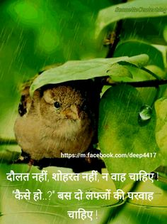 46 Best Hindi Quotes Images Hindi Quotes Manager Quotes Quotations