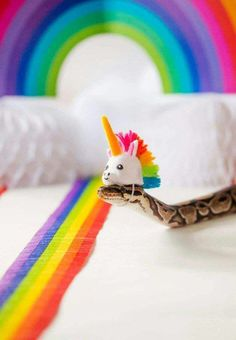 These Snakes In Hats Are Actually Very Cute (Pics)