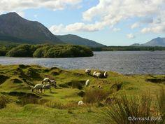 Connemara, Ireland Lake, mountains and sheep :)