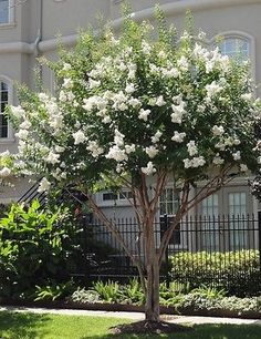 03 Easy and Cheap Landscaping Ideas for Your Front Yard That Will Inspire Cheap Landscaping Ideas, Landscaping Trees, Landscaping With Rocks, Front Yard Landscaping, Crepe Myrtle Landscaping, Landscaping Software, Backyard Trees, Outdoor Landscaping, Southern Landscaping