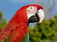 red perrot,seaquarium