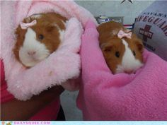 Now I need a guinea pig just to put a pink bow in it. And name it Mae Mobley.