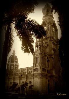 Palmira señorial (Catedral)  By Nena Urán