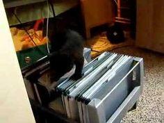 Een kat met een archiefhobby
