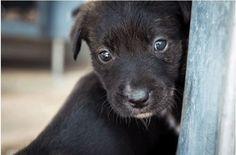 Nieuw Zeeland heeft alle levende wezens erkend als voelende wezens – Dit is groot nieuws.  Nieuw Zeeland heeft een ongeloofelijke wet doorheen gezet wat elke natuurliefhebber al weet – Dat alle dieren voelen op dezelfde manier als wij voelen. Dit is een ongeloofelijke shift in publieke waarneming, waar voorheen alleen sommige dieren de bescherming hadden die ze verdiende. De Animal Welfare Bill die vorige maand erkend is, zal iedereen die dieren pijn doet tot het gerecht brengen. Ook worden…