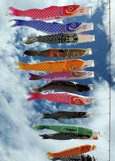 「こどもの日」鯉のぼりChildren's Day, Koinobori, Sagamihara, Kanagawa