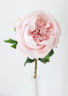 Find beautiful artificial wedding flowers, like this soft pink silk peony with a bud. A pretty pastel color for your DIY spring flower bouquets! Light Pink Tall x Bloom Silk Wired Stem Shop All Silk Peonies Fake Flowers, Pretty Flowers, Artificial Flowers, Silk Flowers, Spring Flower Bouquet, Peony Flower, Spring Flowers, Flower Bouquets, Flower Art