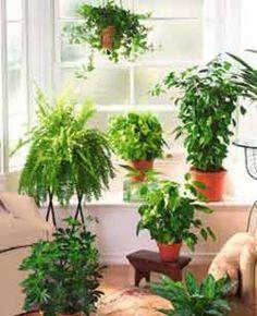 Como cuidar das plantas  Veja mais em http://www.comofazer.org/casa-e-jardim/como-cuidar-das-plantas/