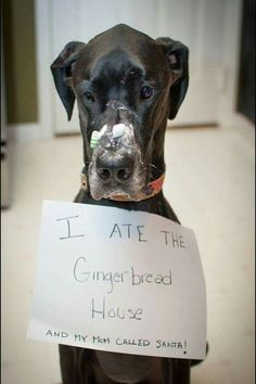 I ate the gingerbread house and mom let santa know....