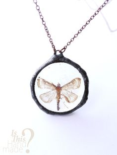 Real dead moth resin pendant. Butterfly by IsThisHandmade on Etsy