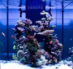 Each month we feature a member of the community and their reef tank to show the many successful ways to keep a reef aquarium. Aquarium Marin, Saltwater Aquarium Setup, Coral Reef Aquarium, Saltwater Fish Tanks, Aquarium Design, Marine Aquarium, Aquarium Fish Tank, Aquarium Ideas, Marine Tank