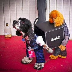 Being a roadie is a dogs life, but someone has to do it... the show has to go on. thingofinterest