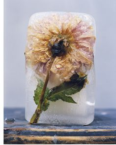 SBG totally digs this idea of freezing whole flowers with stems and leaves.