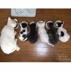 Cute Pet Club