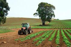 Planting and harvesting fresh Tasmanian produce.  Photo by Dan Fellow for www.think-tasmania.com