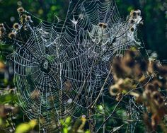 Webs by Elena Stuukstly Kozyryatskaya on 500px