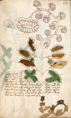 Voynich Manuscript: Unknown Botany, Late 15th century