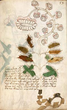Voynich Manuscript: Unknown Botany, Late 15th century