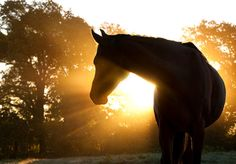 "Find ""horses silhouette"" stock images in HD and millions of other royalty-free stock photos, illustrations and vectors in the Shutterstock collection. Beautiful Creatures, Animals Beautiful, Cute Animals, Baby Animals, Beautiful Arabian Horses, Horse Facts, Horse Silhouette, All The Pretty Horses, Jolie Photo"