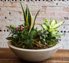 Como montar um vaso de sete ervas