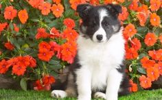 100 Cute Puppy | Beagle Puppy Wallpapers | HD Wallpapers