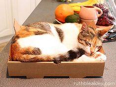 Un cartone per la pizza può diventare una cuccia per gatti
