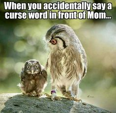 Ideas For Funny Cute Memes Hilarious Animal Pictures Funny Owls, Cute Funny Animals, Funny Cute, The Funny, Hilarious, Funny Raccoons, Super Funny, Animal Jokes, Funny Animal Memes