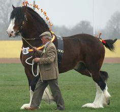 Is there anything more beautiful than a horse? I am getting completely lost in pictures! lol  (Shire horse (Great Britain))