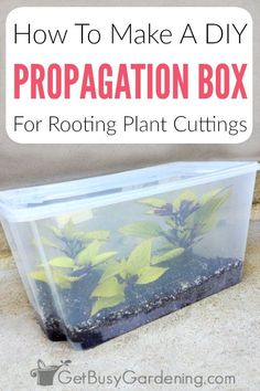 Learn how to make a propagation box for rooting plant cuttings. This easy homemade propagation chamber is inexpensive to make with only a few supplies. Gardening For Beginners, Gardening Tips, Arizona Gardening, Gardening Courses, Gardening Quotes, Gardening Supplies, Garden Plants, Indoor Plants, Propigating Plants