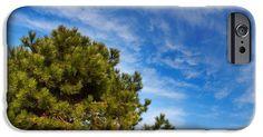Top of pine tree against deep blue sky. iPhone 6 Case