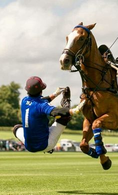 Liked by Richard Nel, Dr Richard Nel Polo Horse, Kings Game, Sport Of Kings, Clear Blue Sky, The Fox And The Hound, Polo Club, Horse Riding, Cross Country, Beautiful Horses