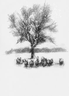 Snow sheep, Artist Sean Briggs producing a sketch a day, prints available at https://www.etsy.com/uk/shop/SketchyLife #art #drawing #http://etsy.me/1rARc0J #sheep