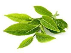 Teh Hijau - Disini ada khasiat maupun manfaat teh hijau cap kepala jenggot untuk kesehatan program diet ketat dan kecantikan rambut serta kulit wajah berjerawat.