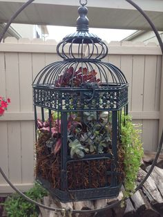 I planted succulents in my kinda crooked birdcage.