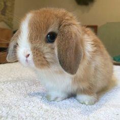 Cute Baby Bunnies, Baby Animals Super Cute, Cute Little Animals, Cute Funny Animals, Cute Babies, Cutest Bunnies, Cute Bunny Pictures, Baby Animals Pictures, Cute Animal Pictures