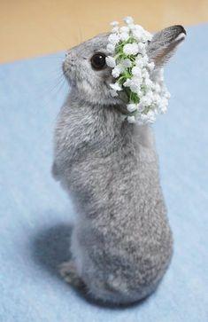 うさぎの天使すぎるファッションショー 花冠をつけたうさぎがかわいいと話題に - BIGLOBEニュース